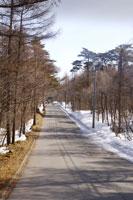 Treelined road