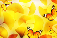 Butterflies on yellow leaves