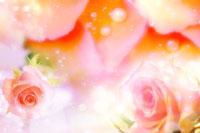 Roses 11010040942  写真素材・ストックフォト・画像・イラスト素材 アマナイメージズ