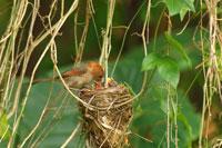 Bird feeding its young