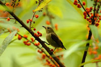 Bird standing on branch
