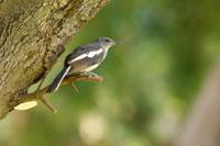 Bird standing on branch of tree