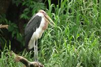 Bird perching on branch above grass