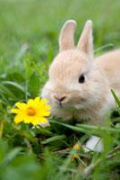 Rabbit 11010044717  写真素材・ストックフォト・画像・イラスト素材 アマナイメージズ
