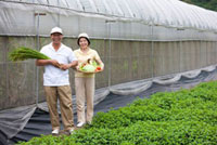 Farmer couple standing outside greenhouse with vegetables in