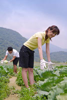 Young couple harvesting in the vegetable garden and smiling