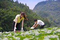 Young couple harvesting vegetables with smile