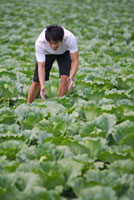 Young man harvesting in the vegetable garden