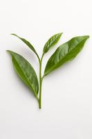Tea, Chinese Tea,