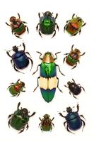 Scarab Beetle, Jewel Beetle, Beetle, Insect, Coleoptera