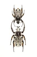 Scarab Beetle, Beetle, Insect, Coleoptera