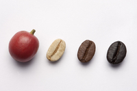 Close-up of variation of coffee beans
