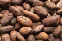Cocoa Bean 11010046119| 写真素材・ストックフォト・画像・イラスト素材|アマナイメージズ