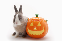 Rabbit 11010047008| 写真素材・ストックフォト・画像・イラスト素材|アマナイメージズ