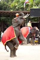 Asia, Thailand, Pattaya, Elephant