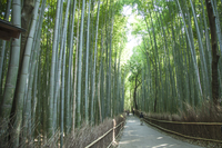 Bamboo Grove, Pedestrian Walkway, Kyoto Prefecture, Japan, A