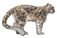 Leopard, Cheetah, Animal,