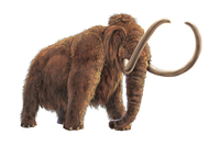 Elephant, Animal,