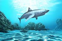 Shark, Animal,
