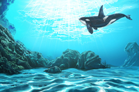 Whale, Killer Whale, Animal,