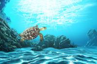 Turtle, Animal,