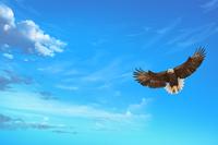 Eagles, Animal,