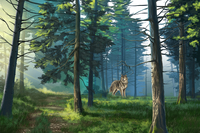 Wolf, Forest, Animal,