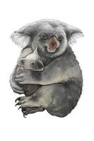Bear, Koala, Animal,