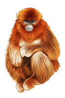Monkey, Animal,