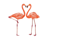 Crane, Flamingo, Animal,