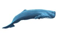Whale, Animal,