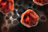 Human Cell, Illustration Technique,