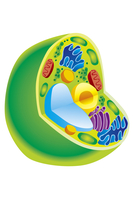 Illustration Technique, Plant Cell, Cell,