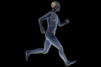 Close-up of human skeleton running