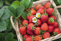 Strawberry, Fruit,