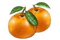 Fruit, Orange,