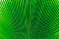 ハワイ 南国スナップ 11011000154| 写真素材・ストックフォト・画像・イラスト素材|アマナイメージズ