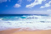 ハワイ 南国スナップ