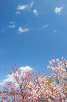 空と雲と植物 11011000987| 写真素材・ストックフォト・画像・イラスト素材|アマナイメージズ