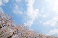 空と雲と植物
