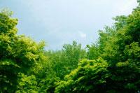 森林 11011001641| 写真素材・ストックフォト・画像・イラスト素材|アマナイメージズ