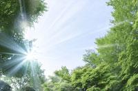 新緑・陽射しイメージ 11011002159| 写真素材・ストックフォト・画像・イラスト素材|アマナイメージズ