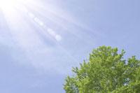 新緑・陽射しイメージ 11011002161| 写真素材・ストックフォト・画像・イラスト素材|アマナイメージズ