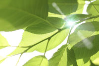 新緑・陽射しイメージ 11011002162| 写真素材・ストックフォト・画像・イラスト素材|アマナイメージズ