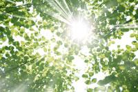 新緑・陽射しイメージ 11011002168| 写真素材・ストックフォト・画像・イラスト素材|アマナイメージズ