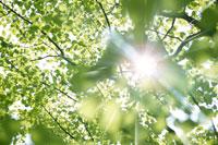 新緑・陽射しイメージ 11011002171| 写真素材・ストックフォト・画像・イラスト素材|アマナイメージズ