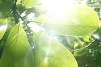 新緑・陽射しイメージ 11011002173| 写真素材・ストックフォト・画像・イラスト素材|アマナイメージズ