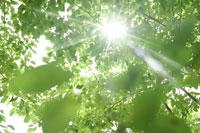 新緑・陽射しイメージ 11011002175| 写真素材・ストックフォト・画像・イラスト素材|アマナイメージズ