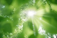 新緑・陽射しイメージ 11011002177| 写真素材・ストックフォト・画像・イラスト素材|アマナイメージズ