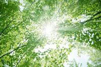 新緑・陽射しイメージ 11011002183| 写真素材・ストックフォト・画像・イラスト素材|アマナイメージズ
